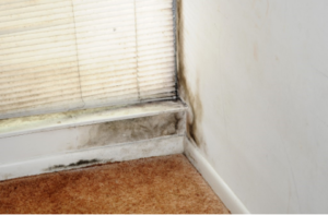 Growth of Mold